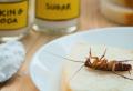Kakerlaken bekämpfen: Die besten Methoden und natürliche Mittel