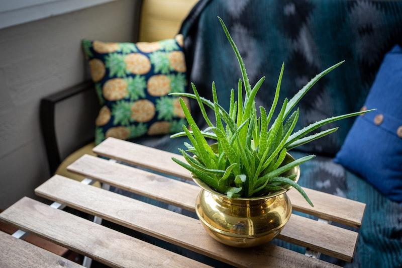 kleiner holztisch grüne pflanze aloe vera anwendung