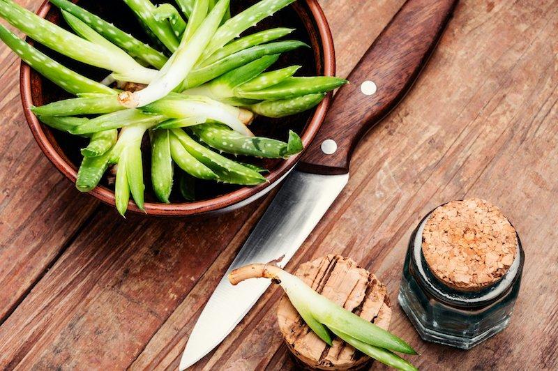 kochen mit aloe vera wirkung diy rezepte