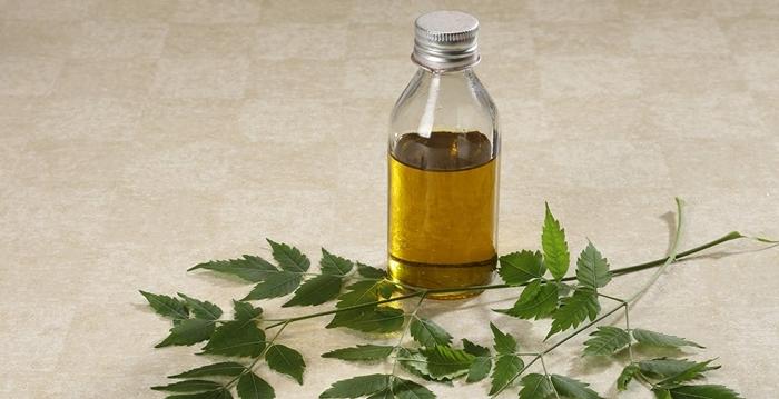 läuse bekämpfen mit naütrlichen mitteln und methoden hausmittel gegen blattläuse neemöl