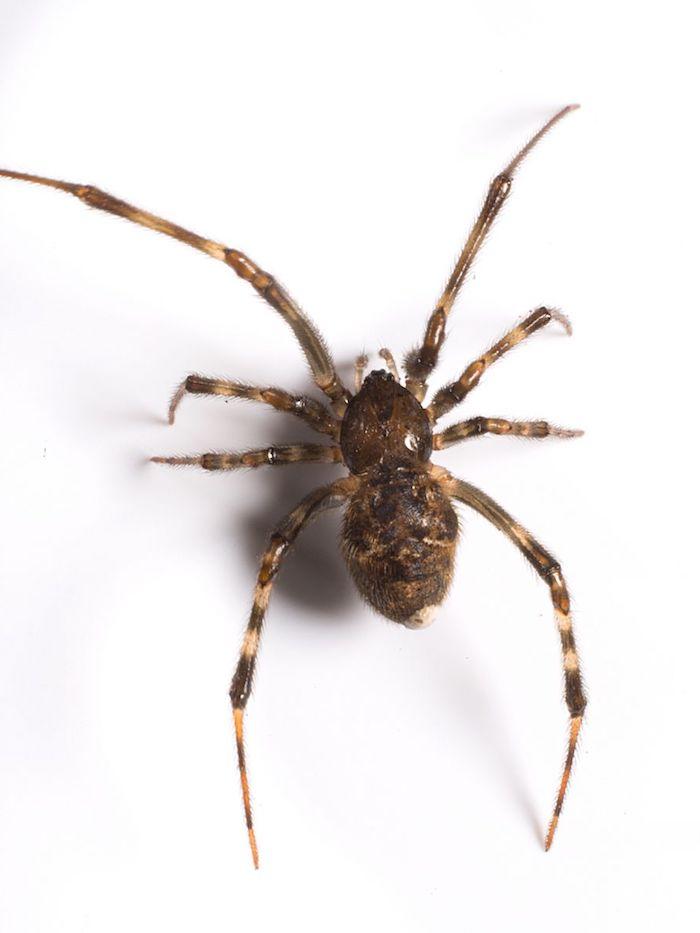 lavendel gegen spinnen hausmittel gegen insekten diy insektenschutzmittel selber machen