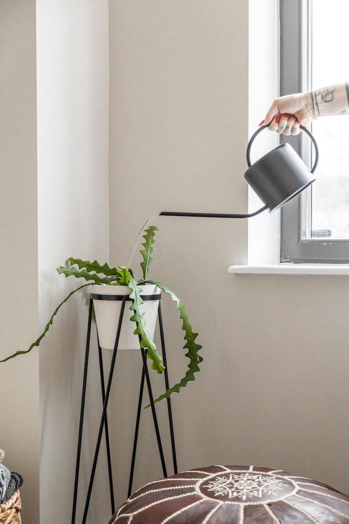 minimalistische einrichtung pflanzenständer schwarz weißes topf mit pflanze trockenresistente pflanzen welchen blumen brauchen selten bewässert zu werden