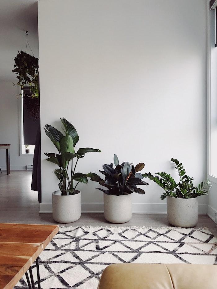 moderne einrichtung wohnzimmer drei große töpfe pflanzen die viel sonne vertragen und wenig wasser brauchen weißer teppich geometrische schwarze linien