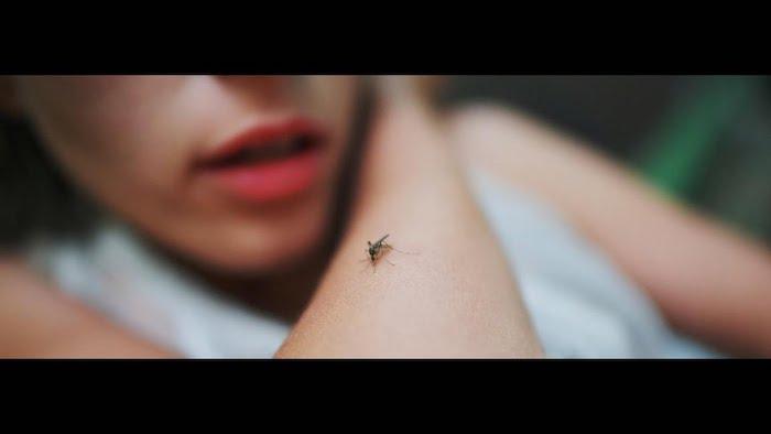 mücken vertreiben leicht gemacht hilfreiche tipps und tricks frau mücke