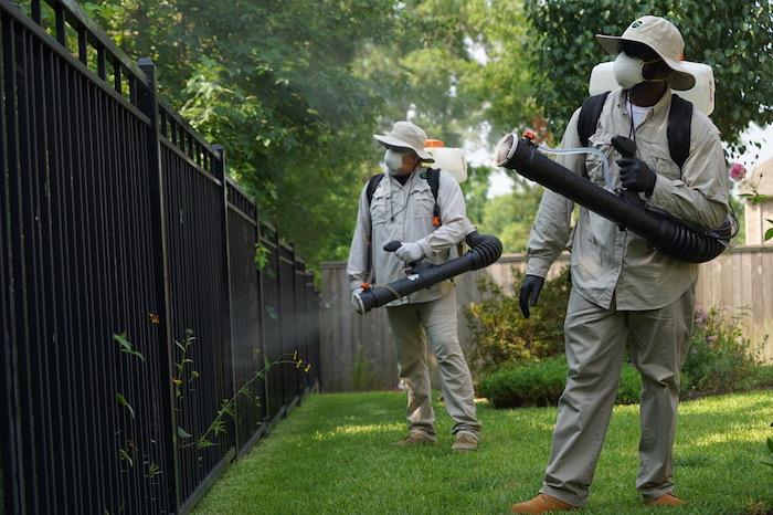mücken vertreiben methoden und tipps schnaken steckmücken im garten