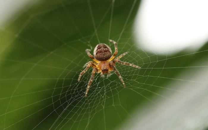 nahaufnahme von einer spinne im spinnennetz spinnen vertreiben natürliche hausmittel