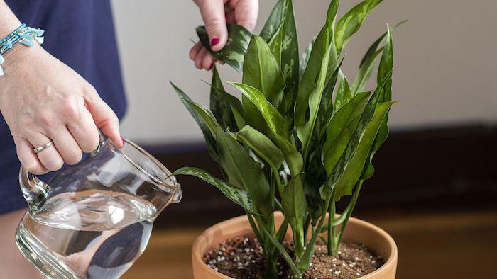 person bewässert grüne blume pflanzen volle sonne wenig wasser brauchen wichtige informationen