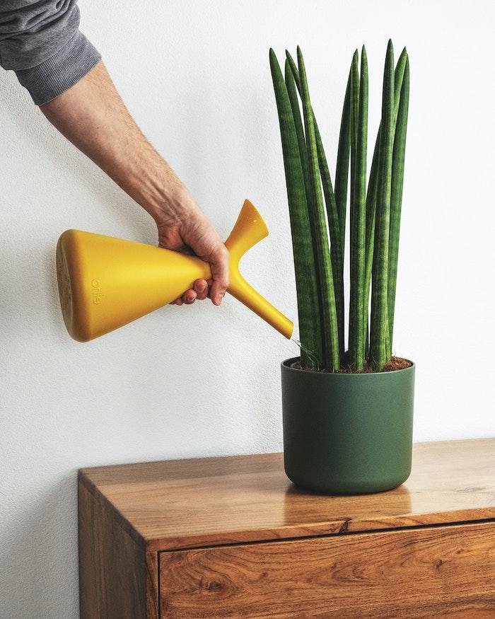 person bewässert pflanze mit einer gelben gießkanne pflanzen die viel sonne vertragen und winterhart sind