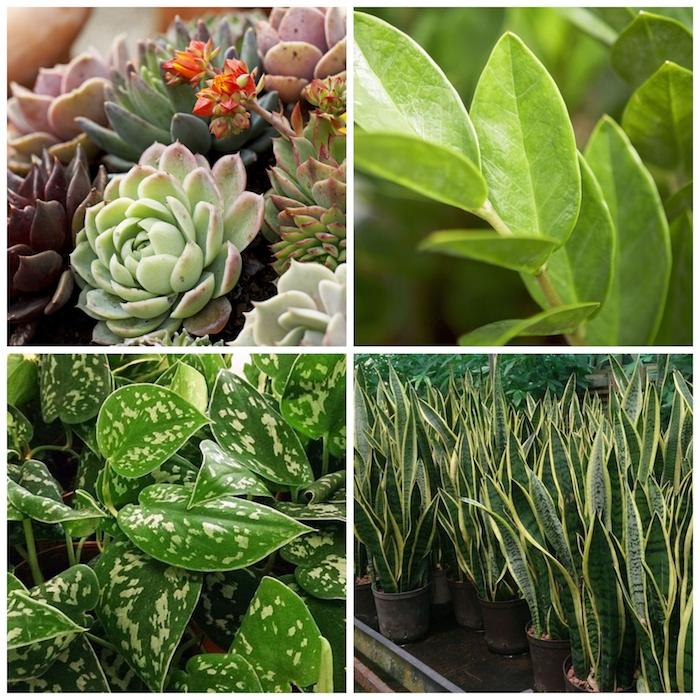 pflanzen die viel sonne vertragen und wenig wasser brauchen sukkulenten pflegen trockenresistent