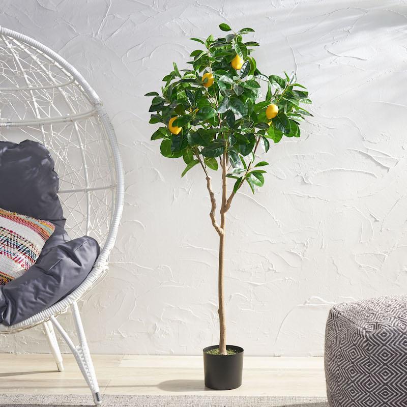 pflege zitronenbaum zitronenbaum schneiden im haus zitronenbaum ziehen wohnzimmer stuhl hohen zitrone selber ziehen