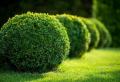 Buchsbaum schneiden – hilfreiche Tipps und Tricks