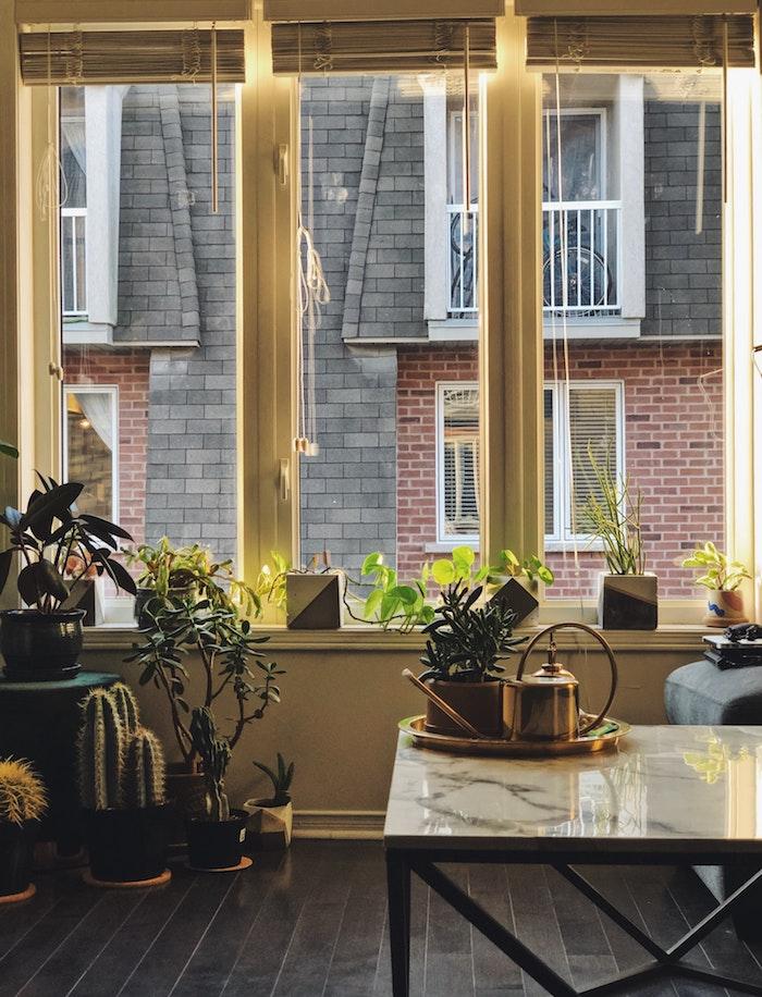 schön eingerichtetes wohnzimmer pflanzen die viel sonne vertragen und wenig wasser brauchen große fenster kleine und große kakteen