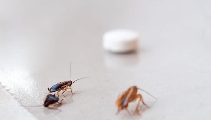 shaben bekämpfen kakerlaken in der wohnung was tun natürliche mittel