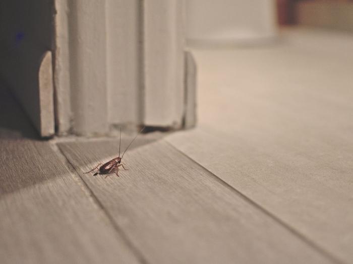 shaben bekämpfen schädlinge im haus kakerlaken in der wohnung mittel hausmittel