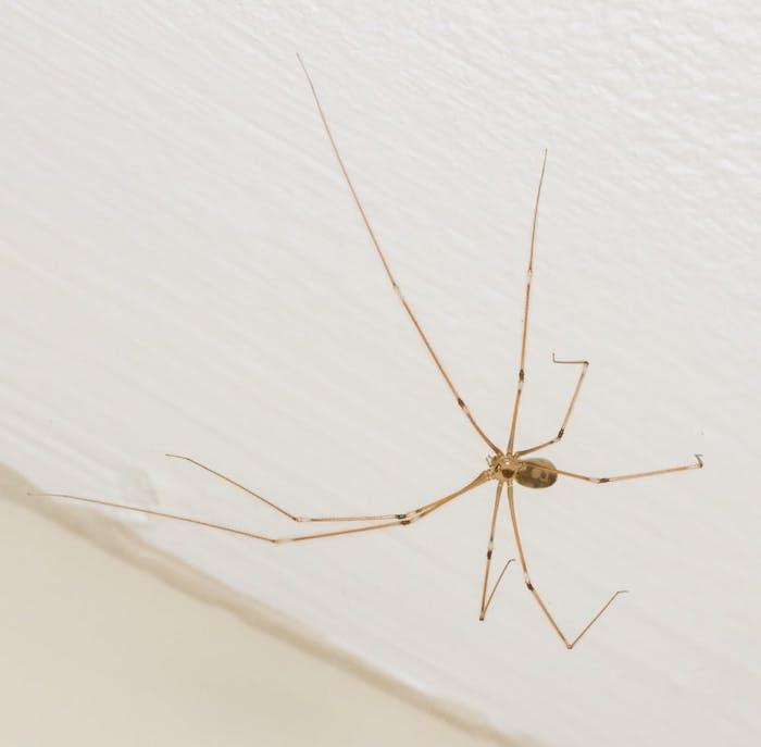 spinnen vertreiben wichtige tipps und mittel zur bekämpfung insektenschutzmittel selber machen
