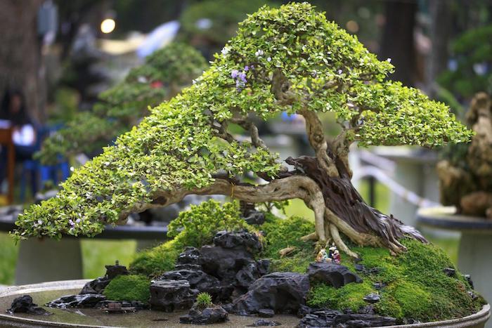 steine ein großer baum bonsai japanischen gerten gestalten bonsai pflege tipps bonsai gießen standort für bonsai