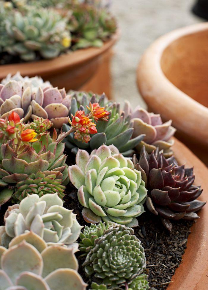 sukkulenten im garten großer top mit kakteen winterharte pflanzen für pralle sonne welche pflanzen vertragen wenig wasser