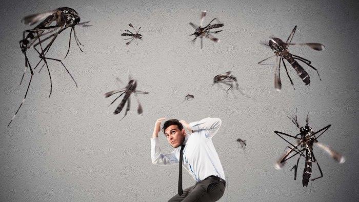 tipps und tricks wie sie mücken vertreiben gartenideen hilfreiche sommertipps