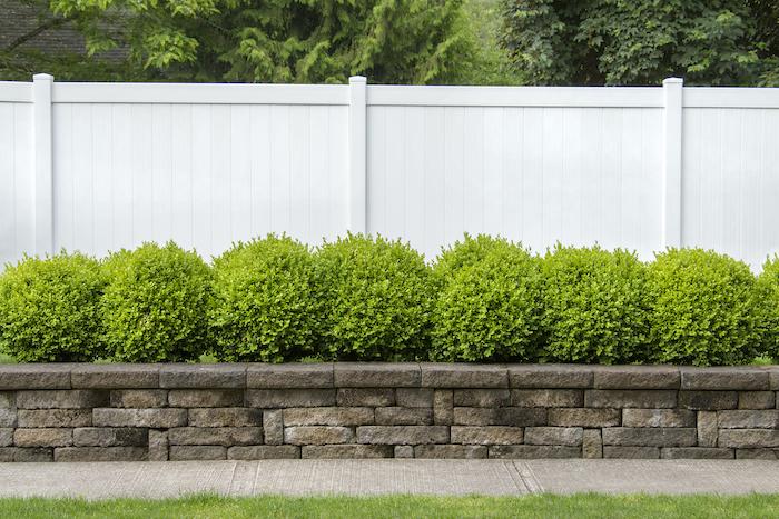 vorgarten anlegen buchsbaum schneiden kleiner garten mit grünen pflanzen