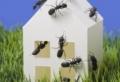 Ameisen bekämpfen – 8 effektive und natürliche Mittel