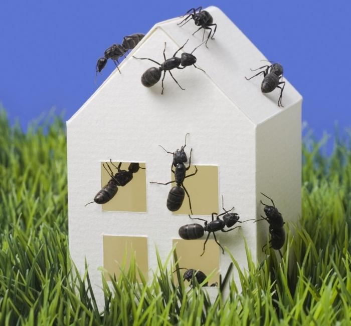 was hilft gegen ameisen methoden und tipps natürliche mittel kleines weißes haus ameisenbefall