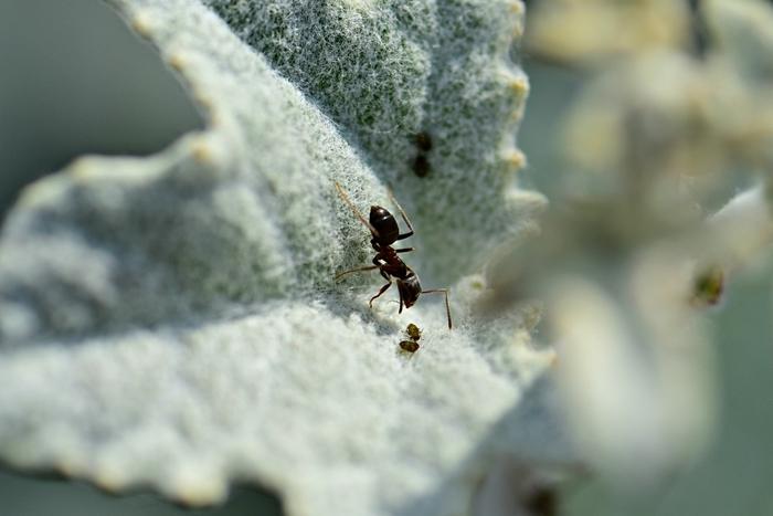 was hilft gegen blattläuse ameisen bekämpfen schädlinge im garten effektive hausmittel zur bekämpfung