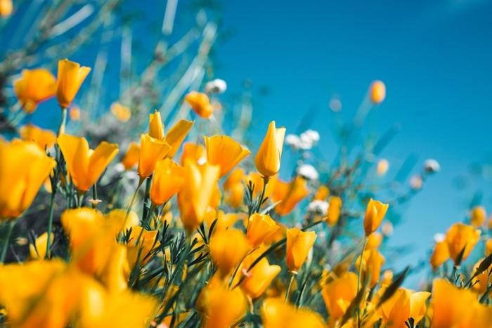 was hilft gegen blattläuse gartentipps für hobbygärtnern gelbe blumen schädlinge im garten