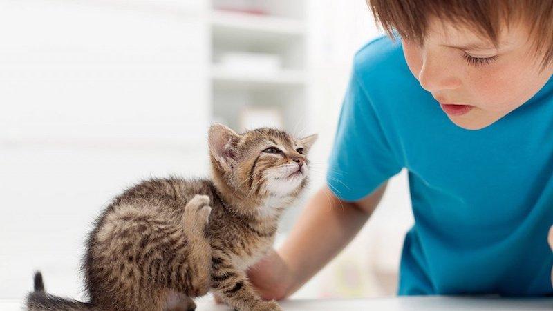 was hilft gegen flöhe bei katzen wie behandelt man flöhe bei katzen flöhe loswerden kleines kätzchen juckt sich junge im blauen shirt
