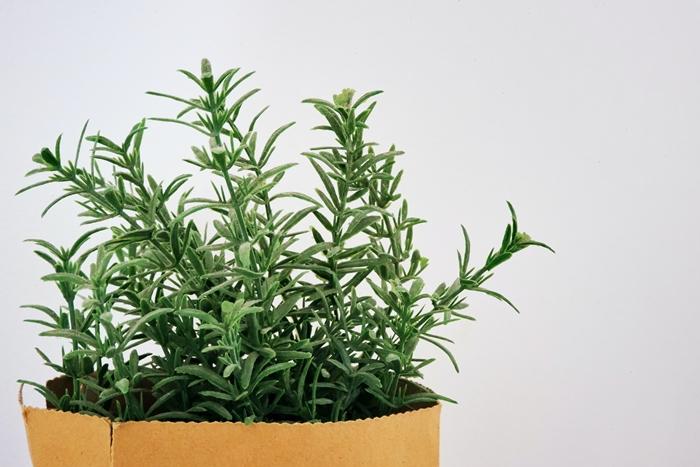 was hilft gegen haarausfall kräuter und natürliche mittel hausmittel rosmarin