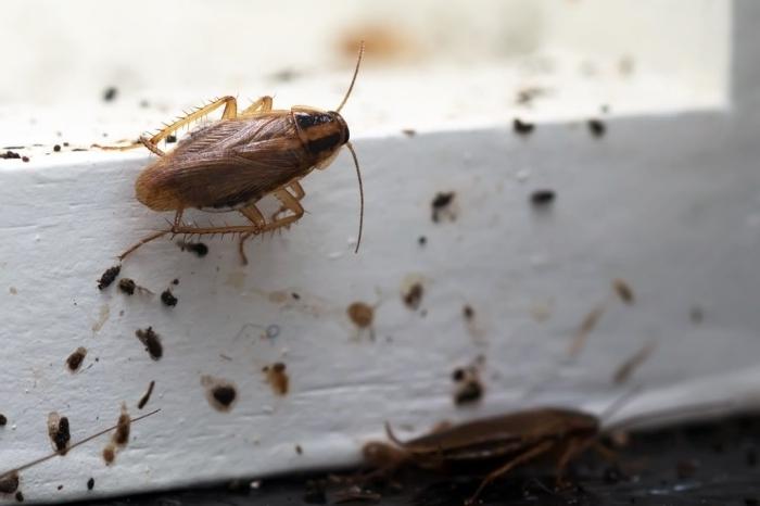 was hilft gegen kakerlaken in der wohnung die besten methoden und mittel zum bekämpfen