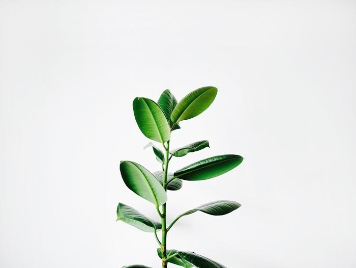 was hilft gegen läuse blattläuse vertreiben hausmittel gegen schädlinge grüne pflanze
