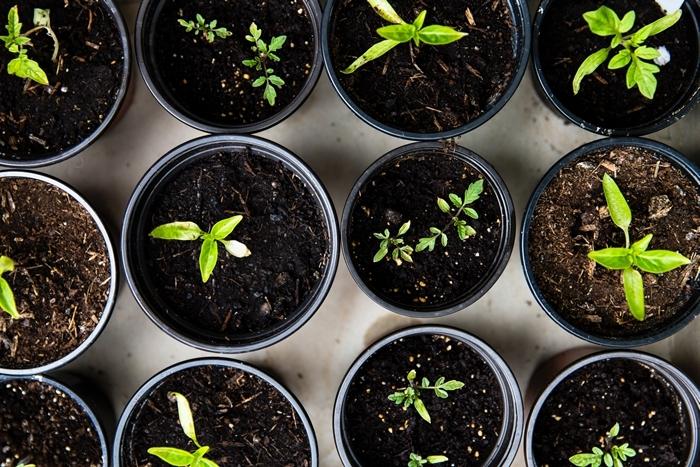 was hilft gegen läuse kleine grüne pflanzen in töpfen schädlinge im garten vertreiben tipps