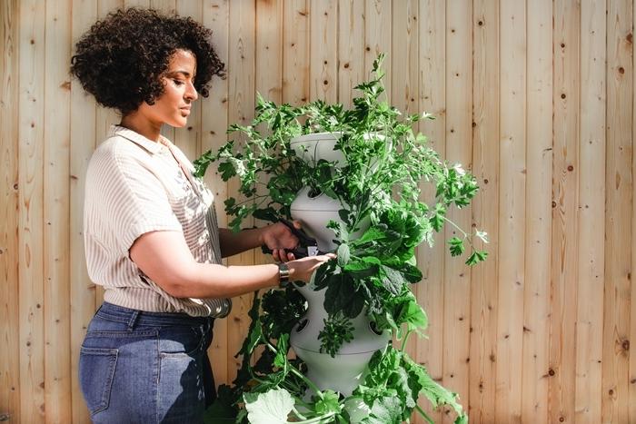 was hilft gegen läuse natrürliche hausmittel zur vertreibung pflanzen schützen vor schädlingen