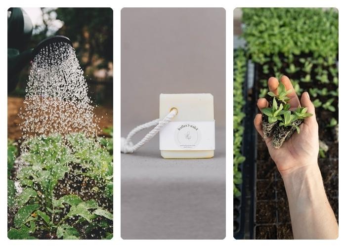 was hilft gegen läuse welche sind die besten hausmittel zur bekämpfung seife seifenwasser pflanzen spülen