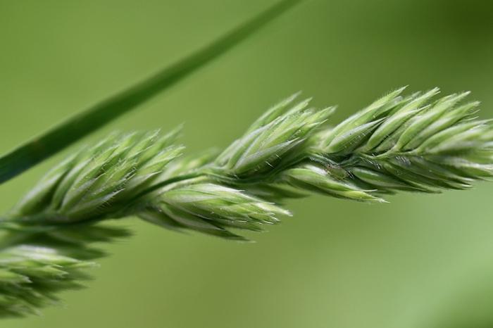 was tun gegen blattläuse grüne pflanze läuse bekämpfen schädlinge im garten vertreiben