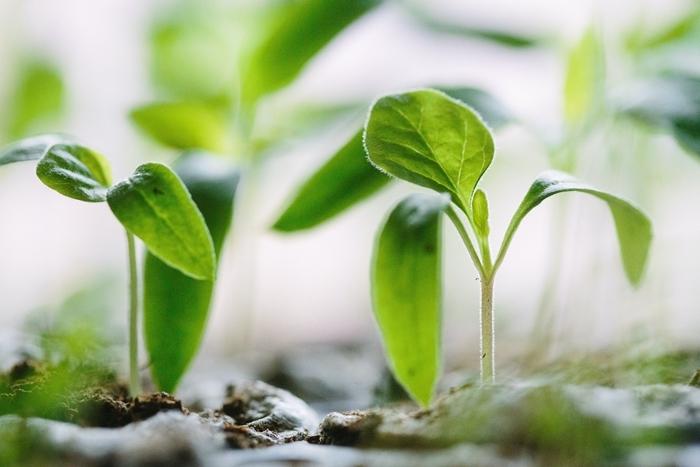 was tun gegen blattläuse kleine grüne pflanzen läuse bekämpfen die besten tipps und ratschläge