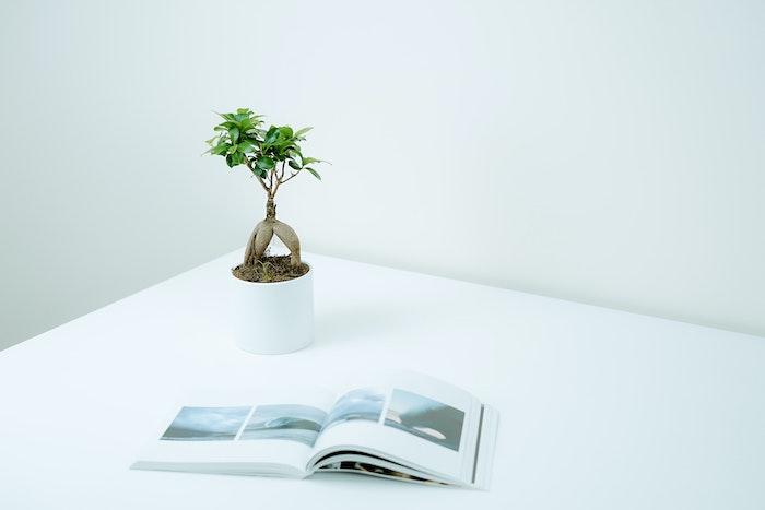 weißer tisch bonsai pflege tipps eine zeitung ein weißer topf mit einem baum mit grünen blättern bonsai gießen