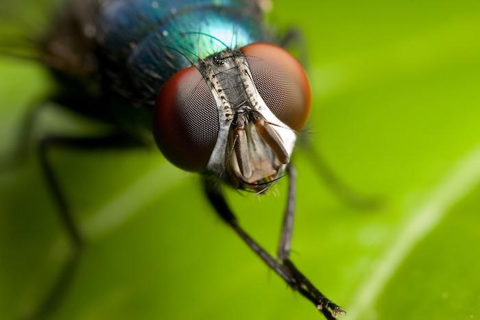 welche sind die besten hausmittel gegen fliegen tipps ideen