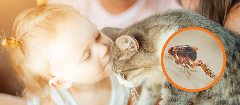 wie bemerkt man flöhe bei katzen woher kommen flöhe bei katzen flöhenmittel bei katzen kleines mädchen küsst katze flöhe