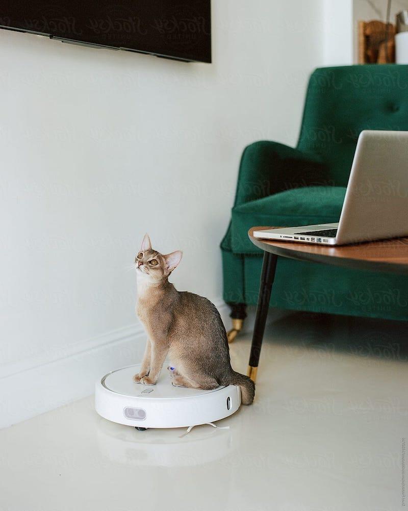 wie entstehen flöhe bei katzen was hilft gegen zecken und flöhe bei katzen flöhe bei katzen bekämpfen braune katze auf weißem robot staubsauger