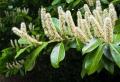 Winterharte Pflanzen, die jeden Garten verschönern können