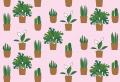 Die besten Tipps zur richtigen Spathiphyllum Pflege