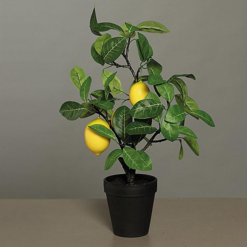 zitrone selber ziehen zitronenbaum blüte zitronenbaum verliert blätter zitronenbäumchen in plastiktopf mit zwei zitronen