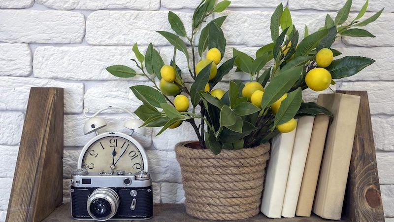 zitronenbaum zitronenpflanze zitronenbäumchen pflege zu hause dekoration zitronenbaum in korb bücherregal