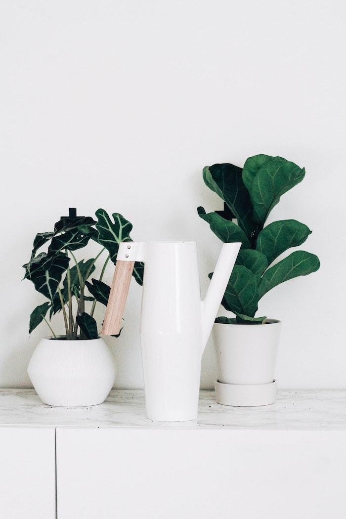 zwei kleine weiße töpfe und gießkanne mit griff aus holz pflanzen die viel sonne vertragen und winterhart sind minimalistische einrichtung