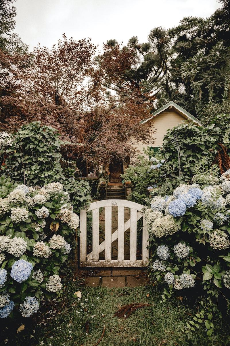 beispiele vorgarten gestalten mit schönen blumen