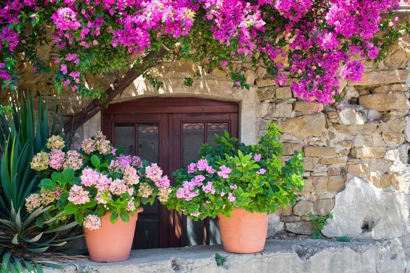 blumentöpfe mit violetten blumen mediterrane pflanzen anlegen ein haus mit fenster
