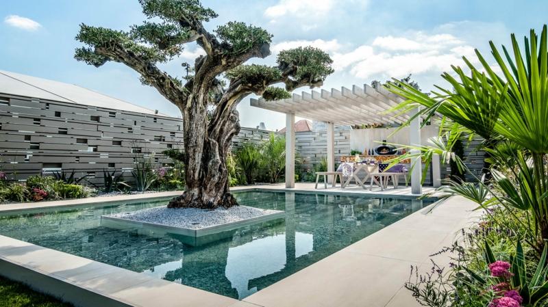 ein olivenbaum mediterrane pflanzen anlegen ein schwimmpool im garten ein pool mit olivenbaum