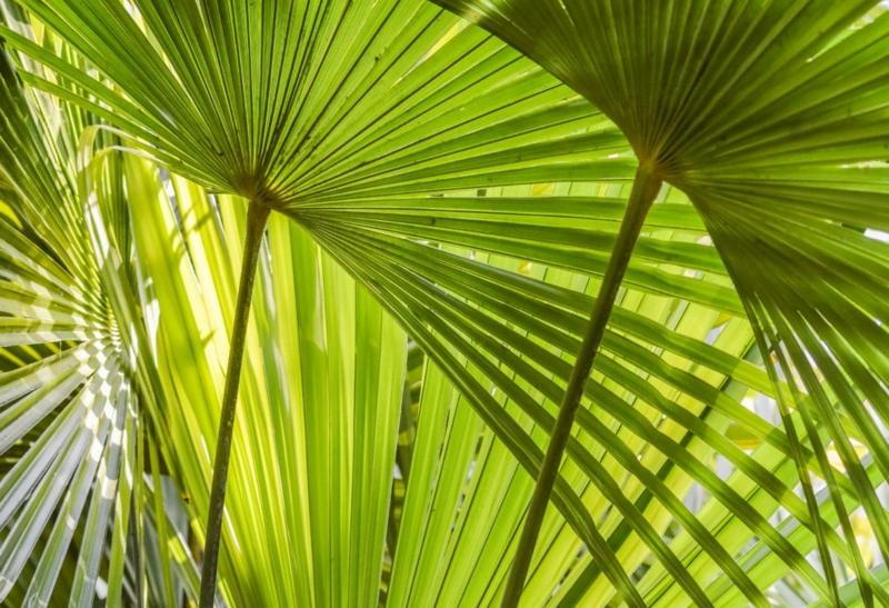 eine große grüne hanfpalme mediterrane pflanzen tipps