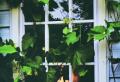 Kunststofffenster kaufen – Mythen und Wahrheiten und was sollen Sie darüber wissen
